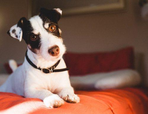 Sembelit anjing dan cara merawatnya