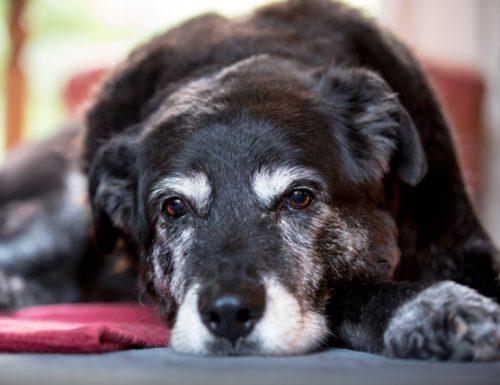 Cara menukar tahun anjing menjadi tahun manusia