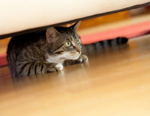 10 ubat untuk kegelisahan untuk kucing