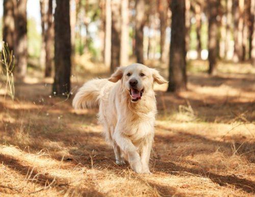 Apa yang perlu dilakukan apabila anjing itu melarikan diri dari anda