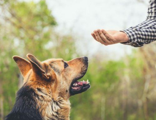 Pernafasan buatan untuk anjing