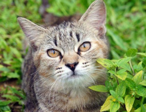 Laktulosa untuk merawat hati anjing dan kucing