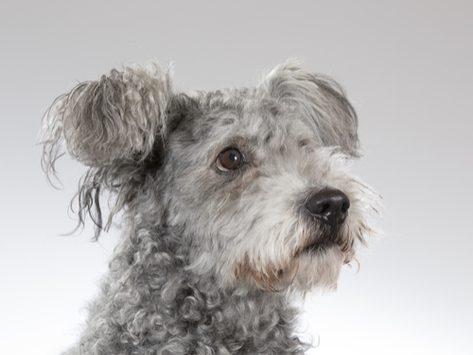 Benadryl può aiutare con l'ansia del cane?