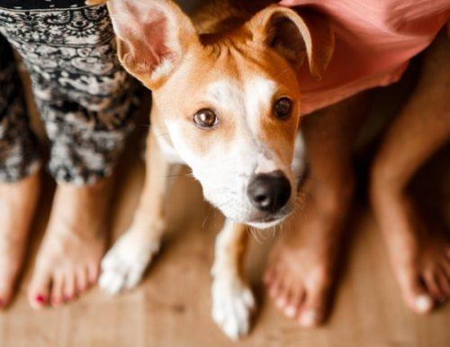 deracoxib: ubat untuk kesakitan dan keradangan pada anjing