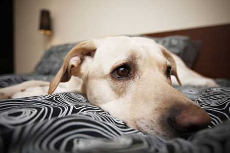 Adakah anjing anda tertekan?