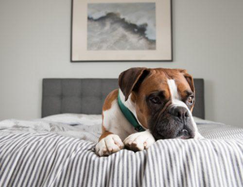 10 petua keselamatan haiwan kesayangan ketika anjing itu sendirian di rumah