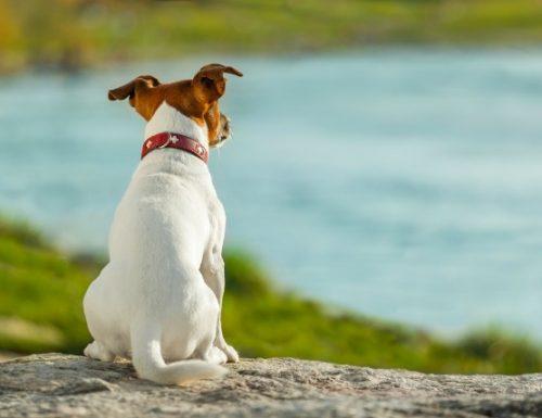 Kanser kelenjar dubur pada anjing