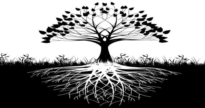 Cos'è l'albero della vita nella Bibbia?